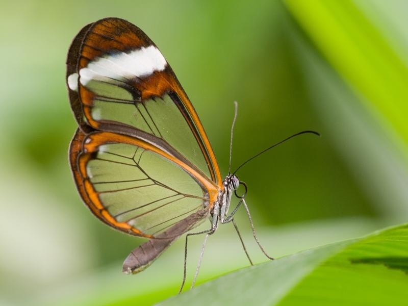 Anneke - Vlinderschuur in Virelles